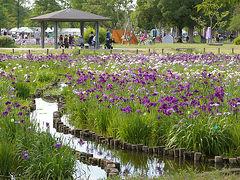 菖蒲をみにいこう ~水元公園の葛飾菖蒲まつり