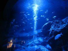 ひとり旅☆東京☆美術館&博物館巡り(3) ●スカイツリーを下から眺め・すみだ水族館でブルーの世界に癒される♪