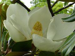 万博公園(5)完 日本庭園の中と前のバラ園に咲く、その他の花たち。