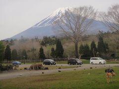 はとバスツアー 富士サファリパーク、いちご狩り、三津シーパラダイス