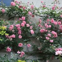 布引ハーブ園の薔薇と神戸動物王国ハシビロコウ