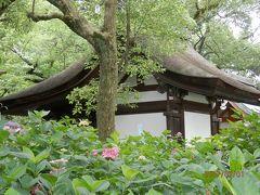 藤の森神社の紫陽花を訪ねて