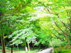 緑がここちよい東山植物園