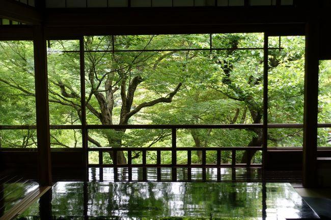 """2017年初夏の京都。お天気に恵まれ、汗ばむくらい。涼を求めて八瀬に足を伸ばしました。<br /><br />瑠璃光院の青紅葉です。""""春の特別拝観""""でしか見ることができない、2ヶ月だけの幻想空間。<br /><br />表紙写真は、書院二階から眺める「瑠璃の庭」の青もみじ。座卓に緑が照り映えて。"""