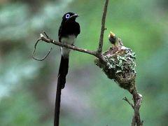 野鳥撮影記録(2017年7月)その1