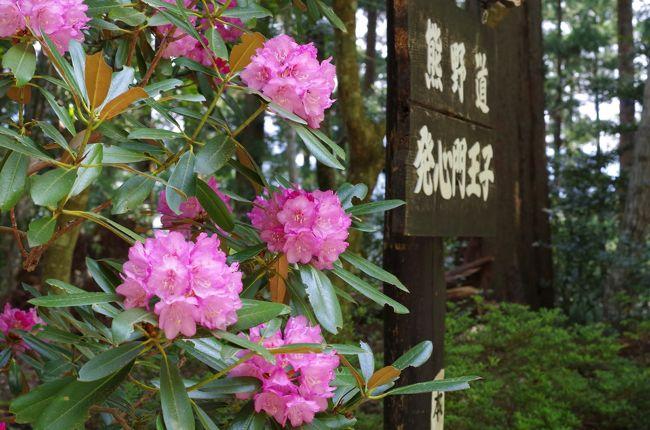 その2「駅から熊野詣」http://4travel.jp/travelogue/11253575 からのつづき<br />旅の3日目は熊野古道を約10km歩く。発心王子から熊野本宮大社へ。このコースは熊野古道の中で、歩きやすく最もポピュラーなコースだ。熊野本宮大社を参拝、薬膳粥を食したあとは、急坂が続く大日越を歩き湯の峰温泉へ。世界遺産に指定されたつぼ湯は人気があり、待ち時間が長く入浴を断念したのは心残である。<br /><br />【旅程】○印の日の旅を本編で紹介しています。<br />・4月29日(祝・土)≪その1≫<br />岡山駅→新大阪駅→紀伊勝浦駅 <紀伊勝浦泊><br />・4月30日(日)≪その2≫<br />紀伊勝浦駅→那智駅→熊野那智大社・那智の滝ほか→那智駅→新宮駅→熊野速玉神社ほか→新宮駅15:55(熊野交通バス)16:56川湯温泉 <宿泊>川湯まつや<br />○5月1日(月)≪本編≫<br />川湯温泉9:00(送迎車)発心門王子(徒歩)熊野本宮大社(徒歩)大斎原(徒歩)湯の峰温泉16:38(龍神バス)16:45川湯温泉 <宿泊>山水館川湯まつや<br />・5月2日(火)≪その4≫<br />川湯温泉→瀞峡ほか→新宮→松阪<br />・5月3日(水)≪その5≫<br />松阪→名古屋