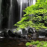 ◆青葉麗し・達沢不動滝・涼風百景