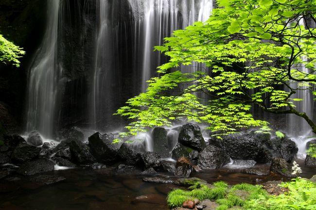 """☆6月2度目の訪問となる磐梯山方面のそぞろ歩き。<br />今回は滝好きや写真愛好家に断トツの人気を誇る""""達沢不動滝""""と<br />禁断の秘湯""""沼尻元湯地獄と白糸の滝""""を訪れました。<br /> <br />まずは一年ぶりに猪苗代町中ノ沢温泉にほど近い""""達沢不動滝""""へ。<br />達沢不動滝は『日本の滝百選』には選ばれていない福島県猪苗代町にあるローカルな滝ですが、全国の滝マニアからはその秀麗な美しさかからとても人気のある滝で、度々TVや映画の撮影地にもなっている隠れ名瀑です。<br />梅雨入りしたものの、撮影時は雨不足で水量はやや物足りなかったですが、、早朝の訪問だったので一番の乗りでした。<br />誰に気兼ねすることなく、邪魔もされず、のんびりマイナスイオンに癒され撮影てきました(^^♪。<br /><br /><br /><br />"""
