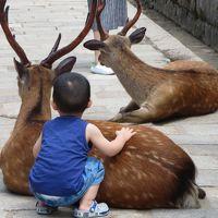 母と行く氷室神社・依水園☆蓮と睡蓮を愛でながら、静かな奈良を歩く(*^_^*)