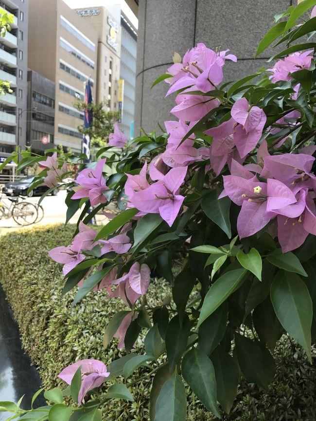 東京メトロ主催の東京まちさんぽに挑戦してきました。歩行距離は約12.3キロ。梅雨明け前にもかかわらず、お天気良すぎる一日。ヘロヘロになりながらも完歩する事ができました。歩きながらiPhoneでパシャりした写真ばかりなので、面白味ないかもしれませんが、記録として記載させていただきました。