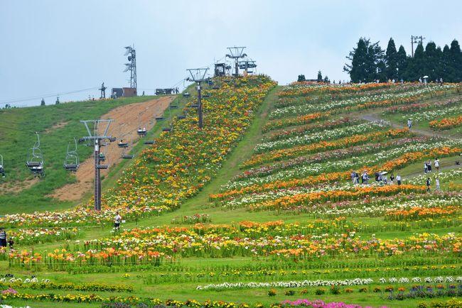はこだてに行ってきました<br />北海道ではありません<br />滋賀県です<br />冬は箱館山スキー場ですが、この時期はユリが咲きます