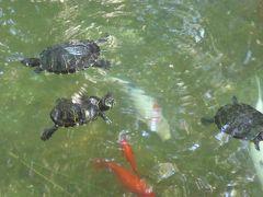 プーリア州優雅な夏バカンス♪ Vol20(第3日) ☆Trani:朝の「Villa Parco Comunale」優雅な散歩 亀の泳ぐ池を眺めて♪
