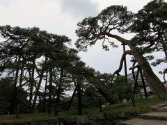 2017春、新潟・福島の名城巡り(18/27):4月20日(9):二本松城(2/6):古松群、ソメイヨシノ、雪洞