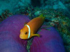 憧れのモルディブ☆アリ環礁の青い海☆水上コテージ&水上飛行機 水中編 2