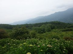 「二兎追う者は一兎をも得ず」あじさいと雲海を求めて美の山へ行く、そして銭!