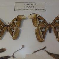 桃の買い出し(03) 世界昆虫博物館 下巻。