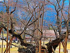 本巣-2 淡墨公園*淡墨観音・淡墨大師にお詣り ☆長命桜を愛で守護して