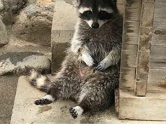 青春18きっぷで行ってきた。~甲府のほうとうと山梨市のゆるゆる動物公園~