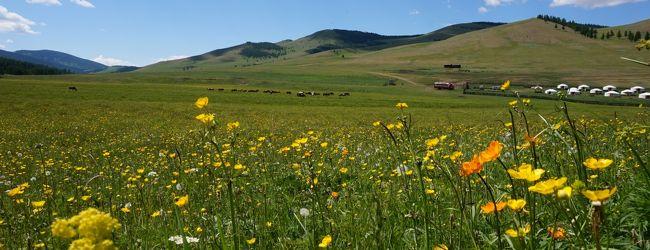 煌めきのモンゴル大自然の旅.....ツェンケ...