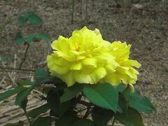 平和公園~原爆の子の像が見つめる景色に咲く花~