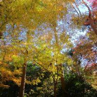 2016京都冬の旅2
