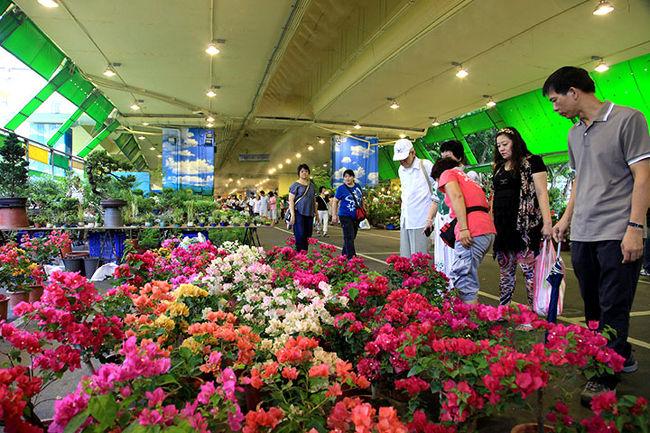 週末の建国南路はいつでも気軽に楽しめます。<br />高架下の駐車場は土・日曜日になると花市場になっています。<br />台北シティに緑を付けます。