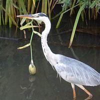 早朝散歩 昨日に続けて・・・宝塚上の池。