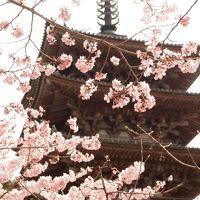 春の京都ひとり旅【1】一日目・醍醐寺の花見 桜も人もいっぱい