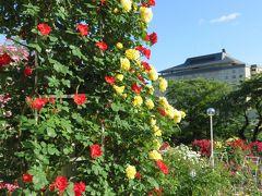 そうだ花を見よう!!~今年は花巻のバラ園へ♪ついでにグルメも楽しみます~
