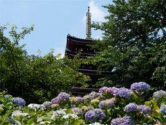 6月はあじさい見たい!松戸の本土寺へ行ってみたよ。