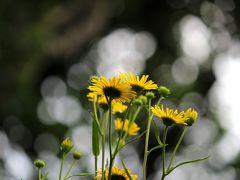 ◆福島・四季・彩々・Part,70・夏をあきらめて・・・