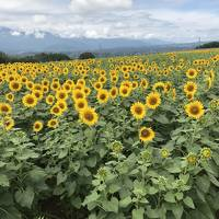 夏の八ヶ岳 山梨編(JALマイルを使って温泉旅館に泊まろう!)