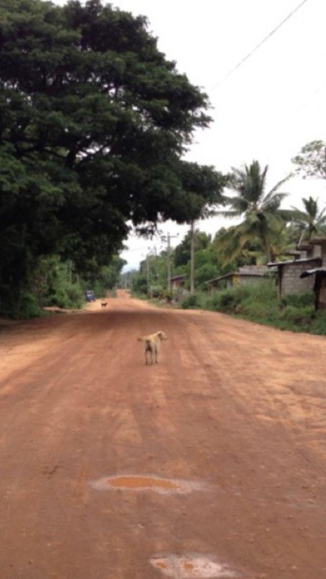 ダンブッラに到着!無事に宿チェックイン!<br />コロンボからシーギリヤに行くには移動が負担なのでダンブッラに1泊。。<br />限られた日数だけど結果は正解。<br />スリランカの女神に出会う。。