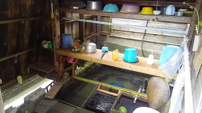 2017年夏休み第一弾。旅の1日目メインは「水と暮らしの文化」が息づく湖西・高島。かねがね興味があった「川端(かばた…自噴する湧き水を生活の中で利用するための水循環システム)」が今も各家で使われている針江地区を朝一番で訪れ、ガイドさんに案内していただきました。<br /><br />【8/18】針江生水の郷・川端見学→(ランチ:かばた館)→藁園神社→山の辺の道~西教寺→(夕食:あゆら)→大津 泊<br />【8/19】賤ヶ岳→伊香具神社→黒田観音寺→(ランチ:隠れ里 重内)→渡岸寺→北国街道木之本宿→(夕食:長浜浪漫ビール)