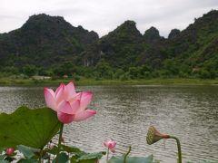 ニンビン、お花見。ベトナムの花と言えば、ハス。蓮の花を求めて早朝ツーリング。