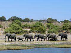 女ひとり5泊9日で南部アフリカ+クウェート【3】サバンナの憧憬 in ボツワナ・チョベ国立公園
