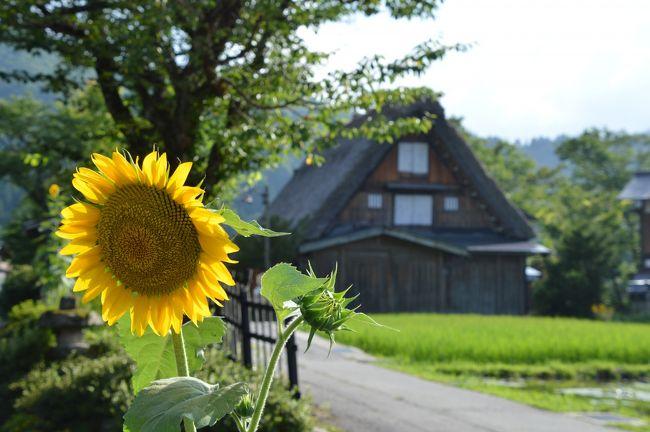 富山で昼食後、世界遺産・白川郷へ。<br />くーも達にとって合掌造りの家屋は、今まで幾度となく映像や写真で見てきた憧れの場所。<br />夏花が咲き乱れる集落の散策は、古き良き日本の風景へと懐かしさを感じるひと時になりました。<br /><br />●8/11 福岡→金沢を移動。富山の白えび亭と岐阜の白川郷へ(金沢宿泊)<br />●8/12 金沢観光。兼六園・ひがし茶屋・近江町市場 福井へ(敦賀宿泊)<br />●8/13 福井の三方五湖と小浜を観光、大阪へ移動しガンバ大阪の観戦<br />●8/14~17 大阪と京都へ帰省 お墓参りなど 関空→福岡で帰宅<br />_________________________________________<br /><br />※旅行記は8/11~13の北陸旅行分が中心です。<br />宜しければ関連作です。<br />→北陸と白川郷をレンタカーで周遊:(1)金沢到着と富山湾の宝石『白えび』に舌鼓編<br />http://4travel.jp/travelogue/11275277<br />→『北陸と白川郷をレンタカーで周遊:(2)夏花薫る世界遺産・白川郷編』<br />http://4travel.jp/travelogue/11277430<br />→『北陸と白川郷をレンタカーで周遊:(3)金沢観光とちょこっとグルメ編』<br />http://4travel.jp/travelogue/11280135<br />→『北陸と白川郷をレンタカーで周遊:(4)海の幸を求め鯖街道までぶらり 福井編』<br />http://4travel.jp/travelogue/11282976<br />
