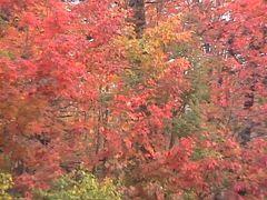 動画 アメリカからカナダへ紅葉を求めてのドライブその1 ニューヨーク州~オンタリオ州。