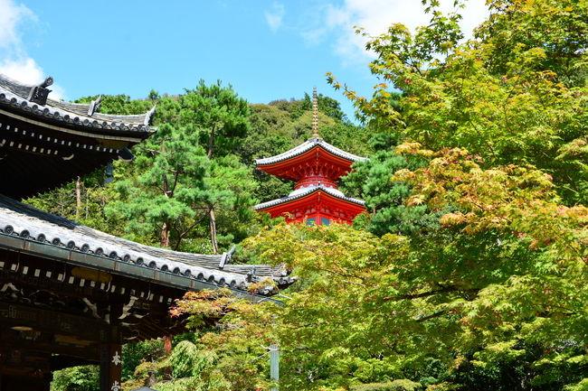 7月31日に体調を崩し8月11日に撮影へ行ったもののやはり8月一ヶ月間は優れませんでした。<br />それに加えて勤務時間の変更も心に疲労感を残してしまったようです。<br />9月に入り体調も回復、よし お墓の掃除へ行って心の疲れも取り出そうということで本日は、<br />光明院から東福寺山内そして泉涌寺へ向かい最後は八坂の塔を撮影してきました。<br />気温もさほど上がらず(歩けば暑かったのですが・・)気持ちよく歩くことが出来ました。<br />本日もたくさんの方とお話をさせて頂き<br />大阪からお見えの方には長くお付き合い頂きありがとうございました。<br /><br />名刺をお渡しさせていただいた皆様へ<br />Facebookもやっています。<br />名前で検索していただきますようお願いします。