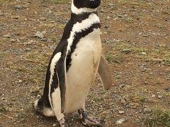 2017南米 その壱    マグダレナ島 ペンギンツアー
