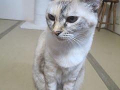 夏休み ふるさと納税をした佐伯市と大分の温泉 3日目 湯布院の天井桟敷でランチ、別府温泉50匹猫を飼っている宿で猫と触れ合い、日田温泉に泊まる