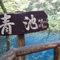 白神山地一人旅☆五能線リゾートしらかみ・白神山地のブナ林・神秘の青池