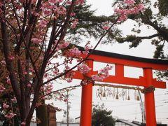 春の京都ひとり旅【8】三日目・上賀茂神社、哲学の道のお花見