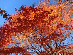 素晴らしい紅葉,奥入瀬渓流と弘前城 一人旅①