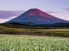 2017年山中湖ロッジ滞在記(7) 初秋の富士山を撮り歩く~蕎麦の段々畑に聳える赤富士etc~