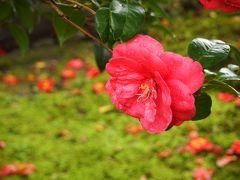 春の京都ひとり旅【9】三日目・法然院、安楽寺、霊鑑寺の春季特別拝観、椿の美しさを知る。