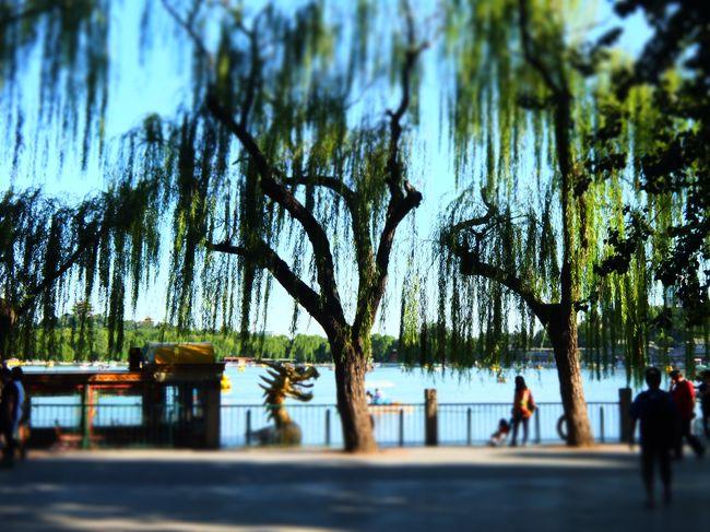 10ウン年ぶりの北京再訪、その3。<br /><br />4日目はアートスポット巡り。<br />どこに行っても、とりあえず最初の感想は「デカい」<br />学習してないみたいだけど、ほんとのことだから仕方ない笑。<br /><br />だから、人民がみな話題のシェアサイクルでスイーって<br />通り抜けていくたびにうらやましくて仕方がなかった。<br />ワタシも乗りたいぞ。<br /><br />チャリの解錠するにも、ごはん食べるのも、<br />博物館のチケット買うのも、なんでもすべてスマホ。<br />日本以上にスマホがないと生活できないほどになっていたことに驚きです。<br /><br />話がそれてしまいましたが、<br />順調な5日間の最後におまけの一日がついてきました。<br />まぁ、手がかかるほどカワイイってことで…<br />