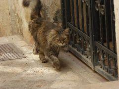 プーリア州優雅な夏バカンス♪ Vol239(第13日) ☆Specchia:イタリア美しき村「スペッキア」愛嬌のある猫の風景♪
