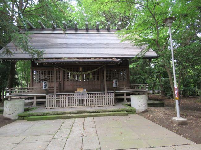 9月24日、午後0時半頃に多聞院の横にある神明社を訪問した。 神明社は毎年お正月にお参りしていて凄い参拝者の長い列があり、とても賑わうのであるがそれ以外はあまり参拝者は見かけることが少ない。<br /><br />この日は日曜日であったが、ほとんど見かけなかったのでゆっくりとお参りが出来た。<br />今回の訪問で気が付いたのは「鎮守の森 神明社 日の原 花の小径」という散歩道が見られた。 春から夏の時期には歩いて見たい。<br /><br />◎神明社について・・説明文による<br />元禄9年(1696年)に柳沢吉保(当時川越藩主)が三富新田として上富・中富・下富村を開村した際、一寺一社の制に基づき開拓農家の檀家寺として上富に多福寺を、また中富に祈願所・鎮守の宮として毘沙門社(・多聞院)を創建した。 後に近隣地域より神明社を含む後述の「合祀七神社」を正式に勧請し、1869年(明治2年)[西暦年要検証]の神仏分離令によって西側の境内は当神社として、また東側は寺院(多聞院)としてそれぞれ独立し、今日に至っている。<br />また1928年(昭和3年)3月に埼玉県史蹟保存として三富開拓遺跡に指定されている。<br />*写真は神明社