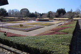 茨城県植物園でバードウォッチング [2016](1)